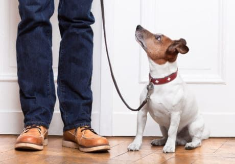 How To Be A Considerate Guest With Your Pets