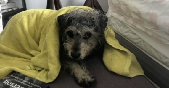 Lost Emotional Support Dog Found In NYC Subway Tunnels