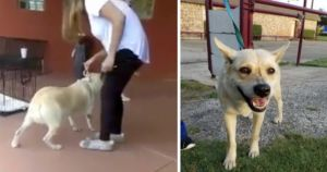 Abandoned Dog's Heartbreaking Video Leads Her To Loving Home