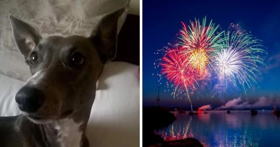 Pet Parents Fight To Ban Fireworks After Dog Is Literally Scared To Death