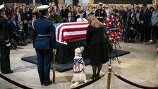 Sully The Service Dog Arrives To View Owner George H.W. Bush's Casket