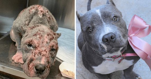 This Shelter Dog Makeover Contest Will Warm Your Heart