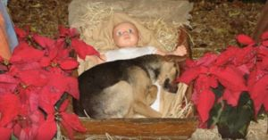 Homeless Puppy Finds Shelter In A Nativity Scene