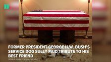 George H.W. Bush's Service Dog Sully Is Loyal Until The End