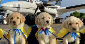 Volunteer Pilots Fly Puppies Training to be Service Dogs to Temporary Homes