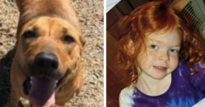 Loyal Dog Protects Missing 4-Year-Old For 2 Days