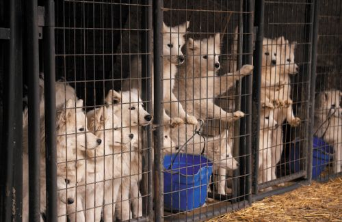 The Truth About Puppy Mills