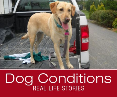 What Would You Do If It Was Your Dog: Bridget's Stomach Upsets and Pica