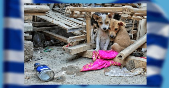 Greece Passes Revolutionary Animal Cruelty Laws After Horrific Abuse