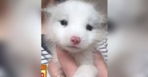 Woman Shocked When Her Puppy Grows Into A Fox!