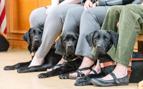 Test Your Guide Dog Knowledge