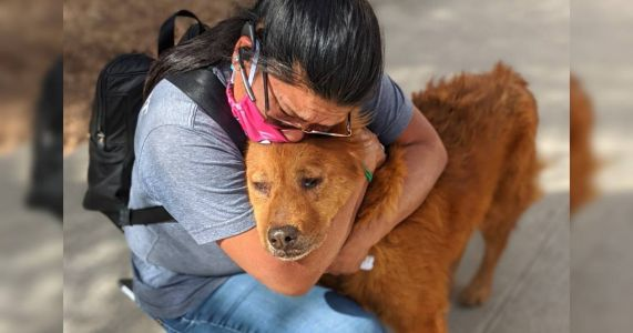 Dog Declared A Stray Turned Out To Be Missing For 7 Years