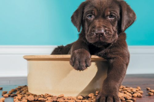 The Best Dog Food for All Life Stages