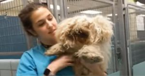 This Dog Was So Matted He Could Hardly Walk - But Just Look At Him Now!