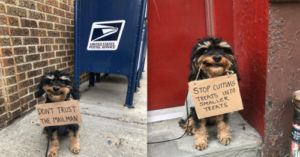 Dog's Adorable Protest Signs Speak For All Pups