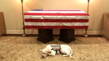 'Mission Complete' For Sully, George H.W. Bush's Service Dog