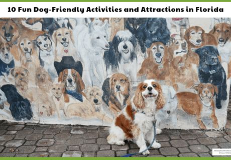 Florida's Dog Friendly Beaches, Boat Tours, Train Rides and More!