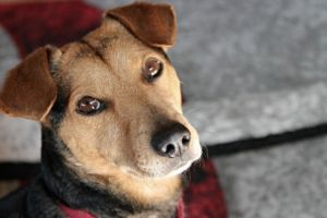 Labels Like Mutt And Mixed Breed Are Out, American Shelter Dog Is In