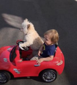 Dog Takes The Wheel Of Tiny Human's Car