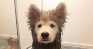 Dog Gets So Ridiculously Muddy That People Think He's Photoshopped