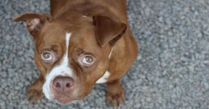 You Helped Save This Dog From A Kill Shelter After Her Human Died