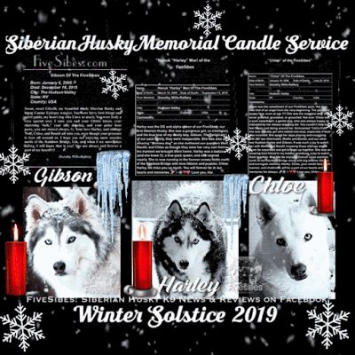 Siberian Husky Memorial Candle Ceremony on This Winter's Solstice