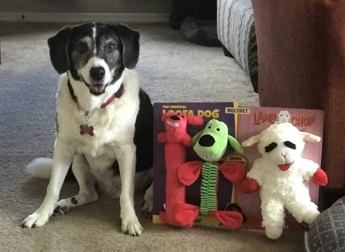 Cute Doggie Christmas Gifts From BJ's Wholesale Club!
