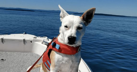 Rescue Dog Loves The Smell Of Endangered Whale Poop