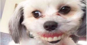 Smile! This Dog Got A Hold of Dentures and The Results Are Hilarious