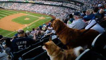 Take Your Dog to See the Red Hot Seattle Mariners this Weekend