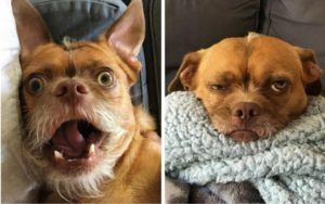 Saved From Death Row, This Pup Wears His Emotions All Over His Face