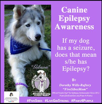 LiveGibStrong Paws4Purple Feature: Help! My Dog Had a Seizure! Is it Canine Epilepsy?