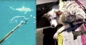 YouTuber Saves His Curious Dog From Sharks