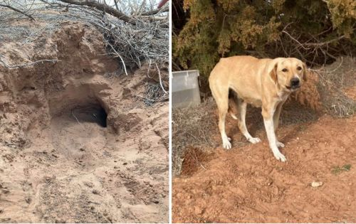 Dog Digs 20 Foot Tunnel To Protect Her Puppies From Freezing