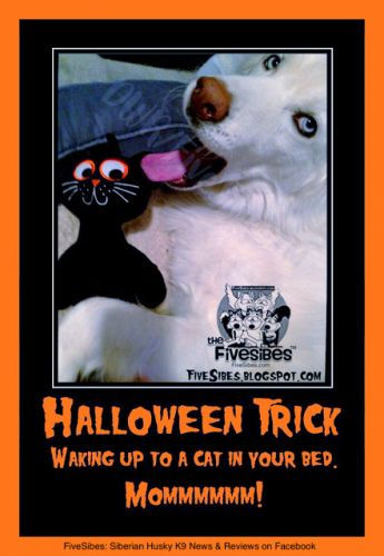 A Halloween Trick for Wolfie on FlashbackFriday!