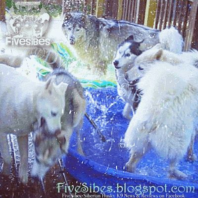 It's FiveSibes Summertime Pool Party on FlashbackFriday!