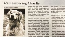 Dog's Heartfelt Obituary Goes Viral: 'He Was Best At Unconditional Love'