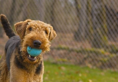 Theme Parks and Tours with Dog Kennels