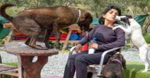 Woman Quit Her Job And Spent Her Life Savings To Save Stray Dogs