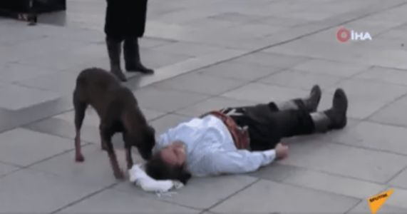 Interrupting Dog Adorably Runs To Aid Of Performer Pretending To Be Injured