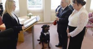 Jealous Rottweiler Steps In As Best Man, Interrupts Dad's Wedding To 'Object'