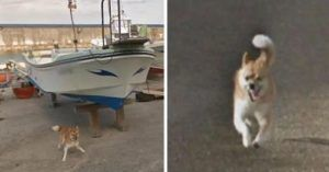 Brave Little Dog Does His Best To Scare Off The Google Street View Car