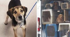 Your Purchases Made This Tennessee Pup's Freedom Ride To New York Possible