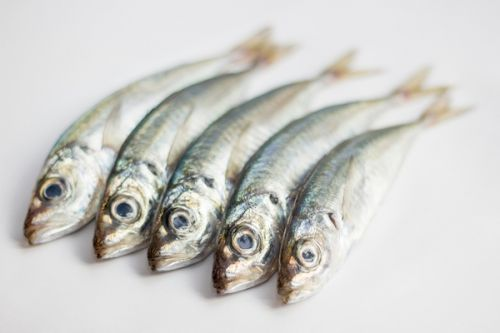 Sardines for Dogs? Can Dogs Eat Sardines?