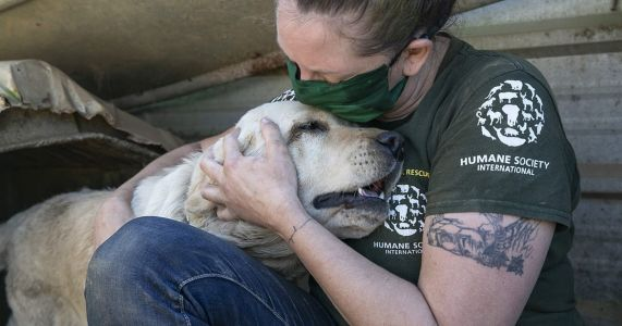 "196 Dogs Saved From Meat Farm That ""Smelled Like Death"""