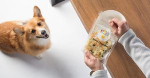 We Found the Healthiest Dog Food Out There and They Deliver!