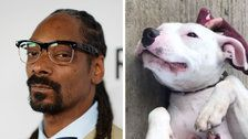 Snoop Dogg Wants To Adopt This Abandoned Dog Named Snoop, And It Needs To Happen