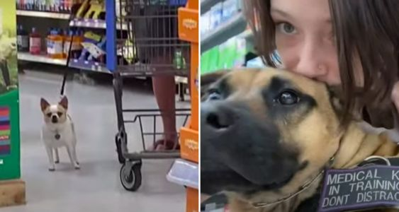 Woman With PTSD Confronts Man With Improperly Trained Dog