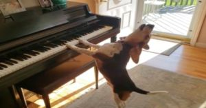 Piano-Playing Rescue Beagle Gets His Human Sister To Dance