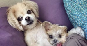 Marnie the Dog's Social Media Will Live On Through Her Sister